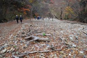「1号ダム」の上流部。治山ダムの効果で土砂が堆積している。渇水期に沢水が伏流すれば、魚類や水生昆虫の生息環境が失われる。