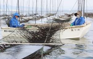 諫早湾で被害を受けつつノリ漁を営む篠塚光信・美恵子夫妻。2014年12月19日。(撮影/永尾俊彦)